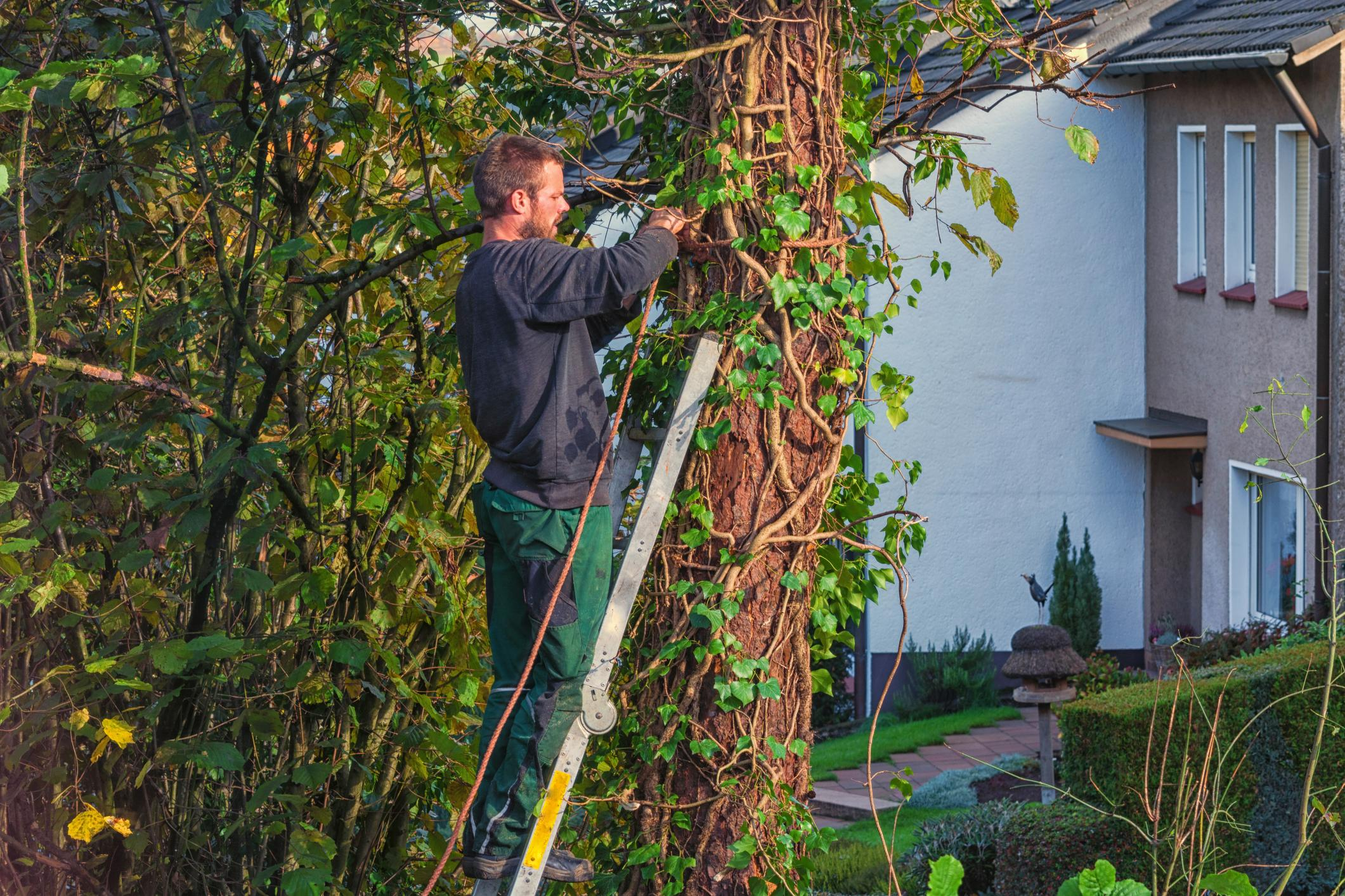 Tree Service Ashburn VA - Services