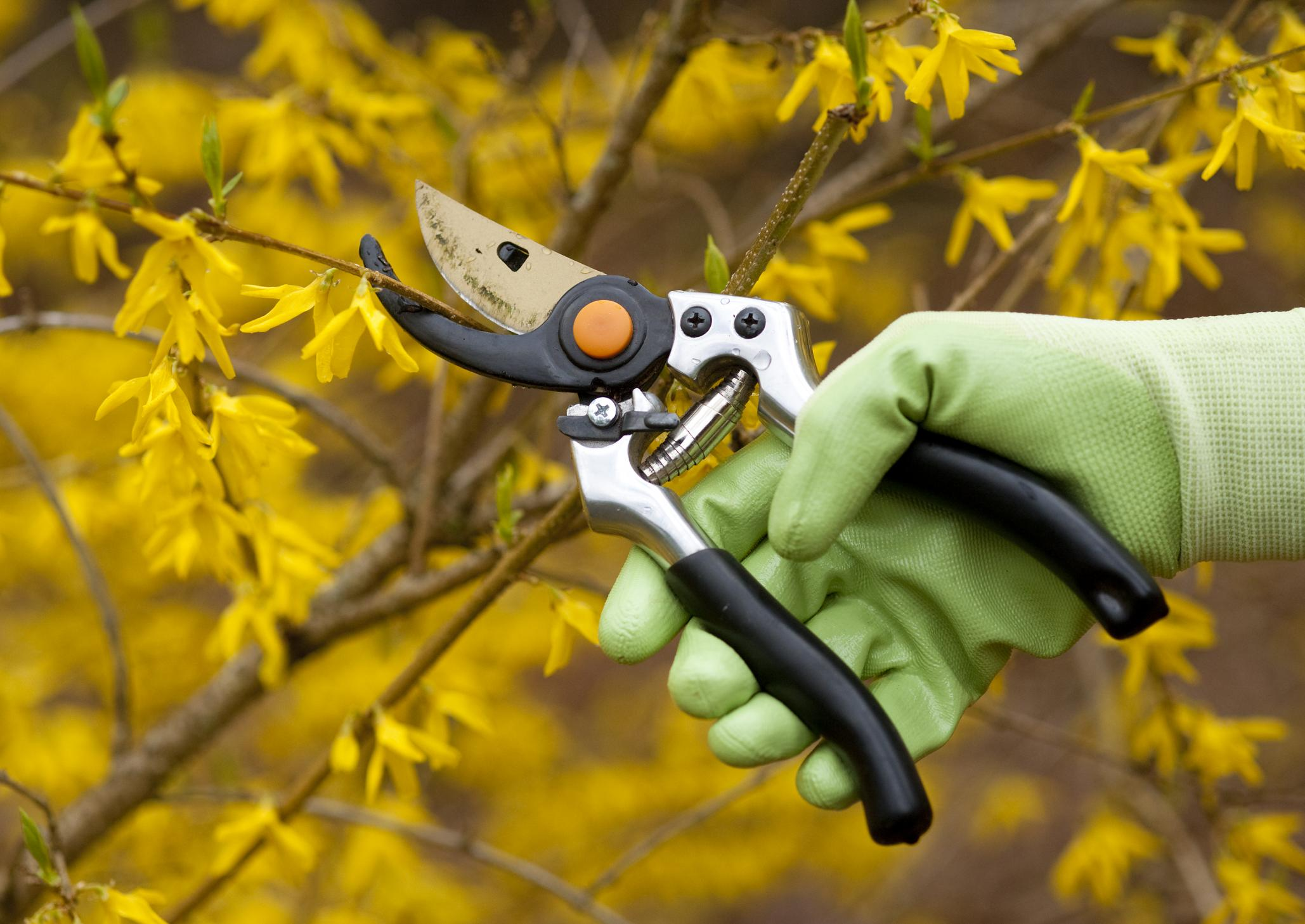 Tree Service Ashburn VA - Tree Pruning 1