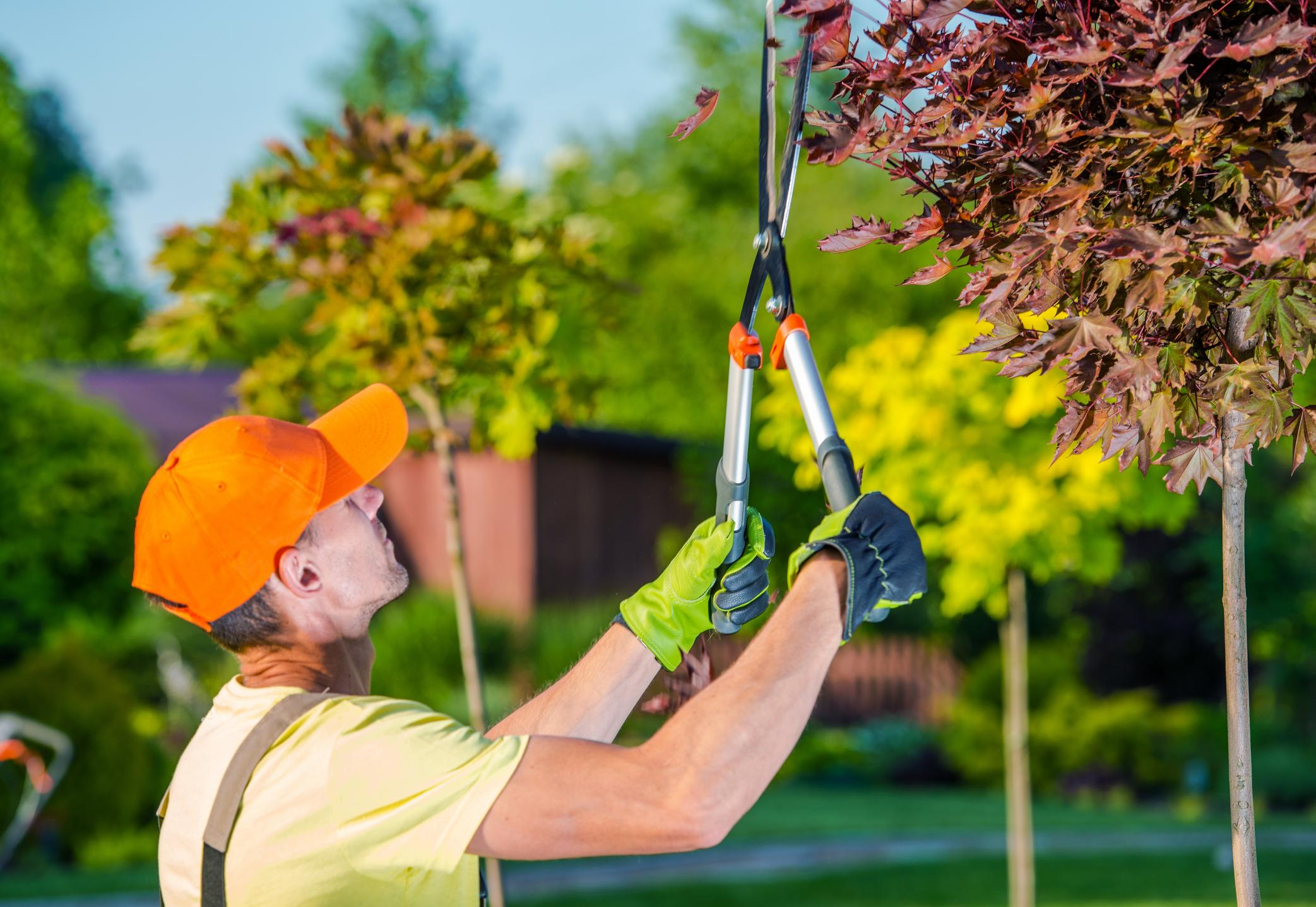 Tree Service Ashburn VA - Tree Trimming 1